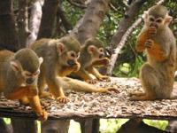 Teneryfa Monkey Park